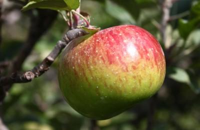 paket wisata malang batu petik apel