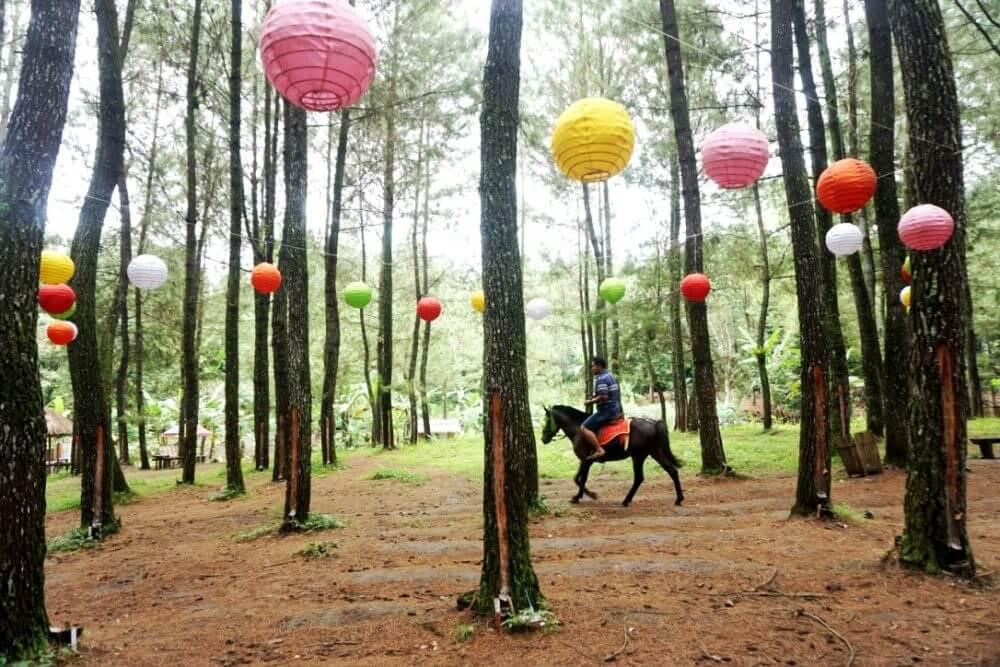 Hutan Pinus Banyuwangi