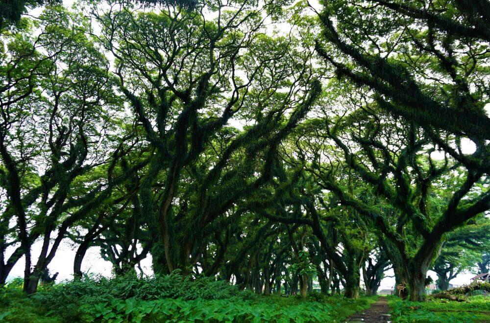 Taman Jawatan Banyuwangi